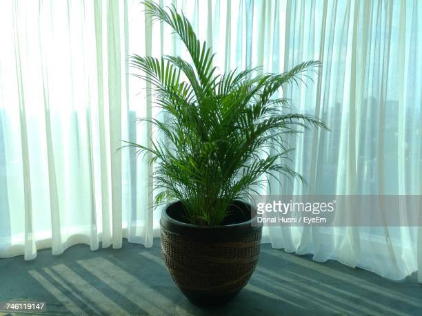 Potted Plant On Floor By Curtain During Sunny Day