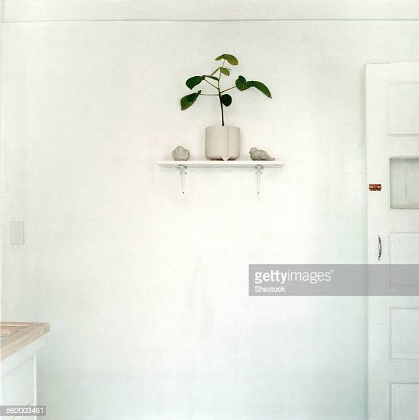 Potted plant on shelf