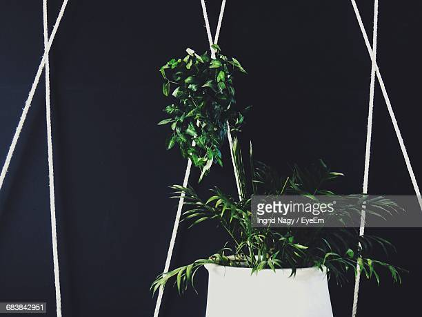 Potted Plant On Sunny Day