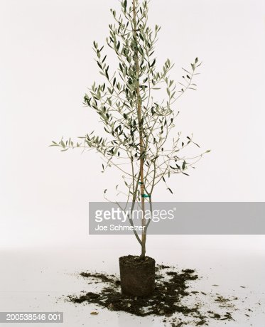 Potted plant with dirt on floor : Stock Photo