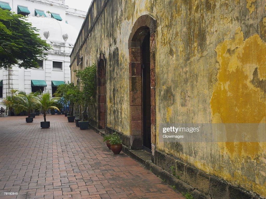 Potted plants against a wall, Old Panama, Panama City, Panama : Foto de stock
