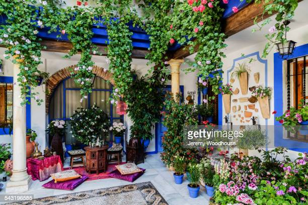 Potted plants and flowers in courtyard