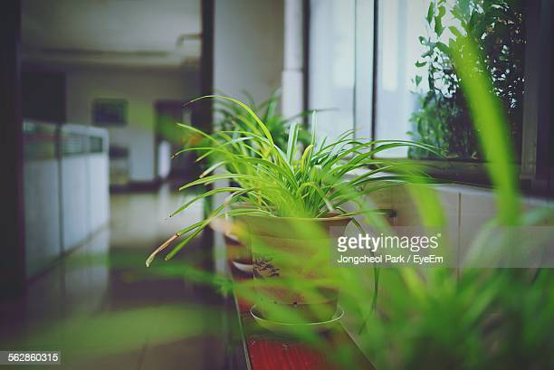 Potted Plants By Window At Office