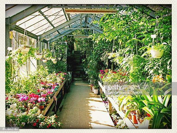 Potted plants growing in greenhouse