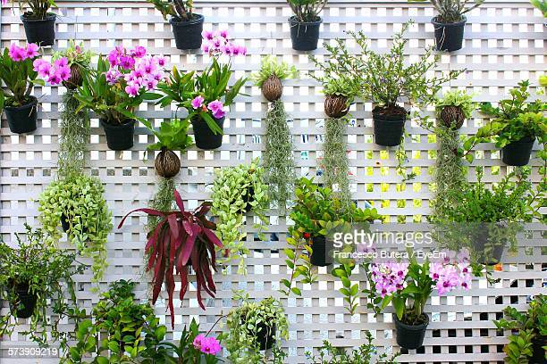 Potted Plants Hanging On Fence