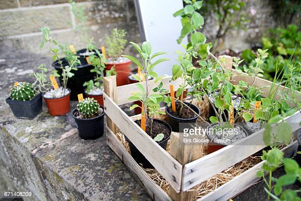 Potted Plants In Crate At Backyard