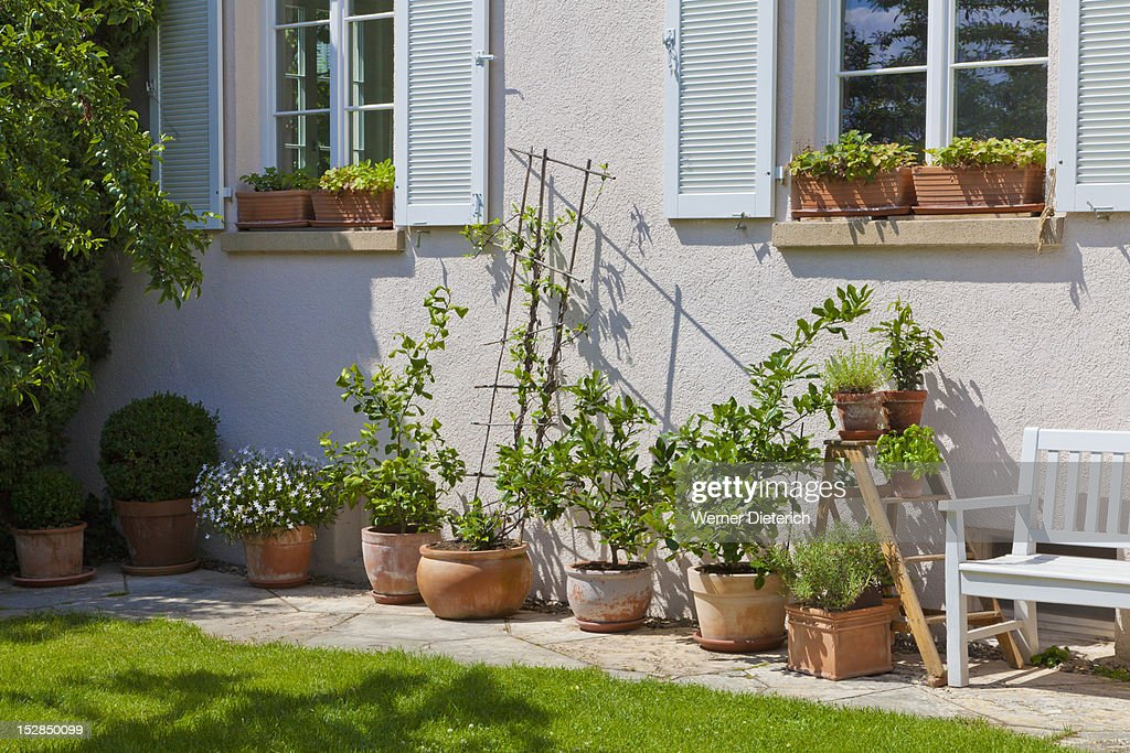 Potted plants in front of detached house germany stock for Plants for front of house