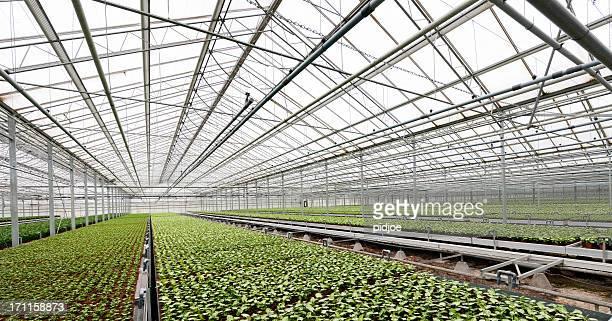 Plantes en pot dans une serre
