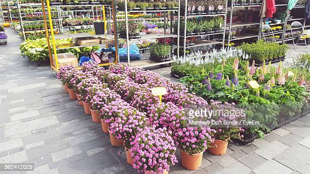 Potted Plants In Plant Nursery For Sale