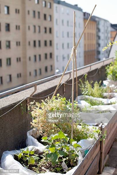 Potted plants in wooden crate at urban garden