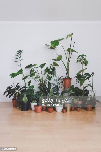 Potted Plants Indoors