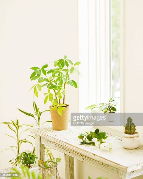 Potted Plants Near Window Sill