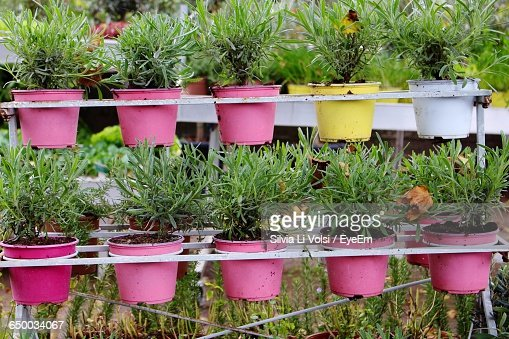 Potted Plants On Rack At Garden Stock Photo Getty Images