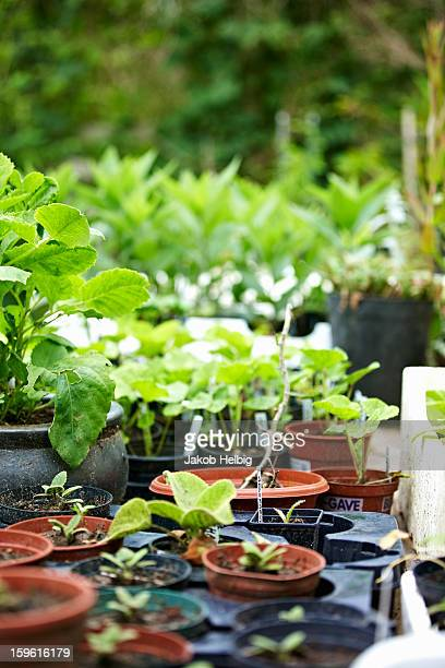 Potted plants on table in backyard