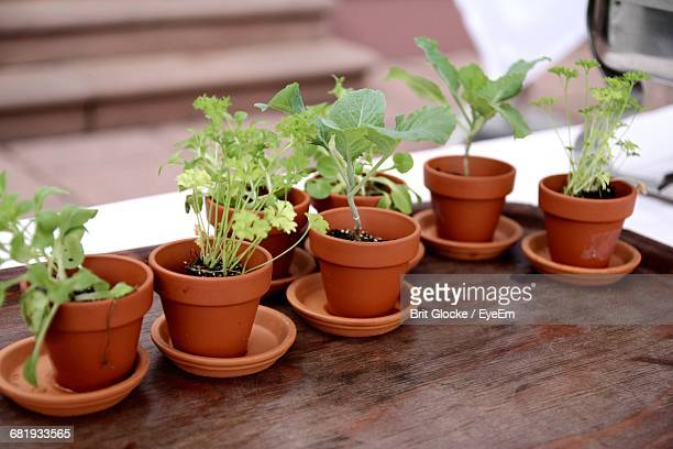 Potted Plants On Table In Kitchen