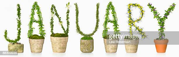Potted plants spelling January