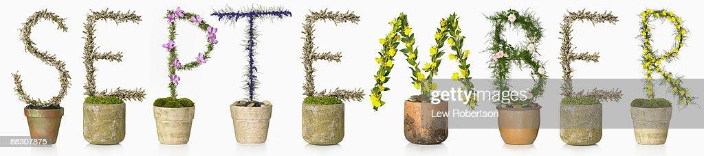 Potted plants spelling September