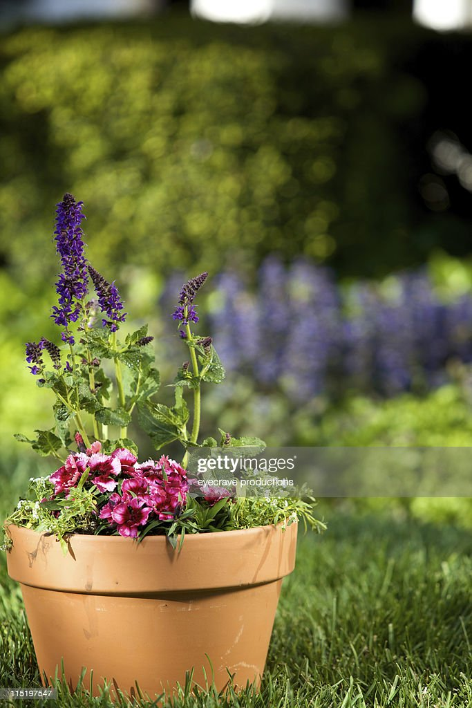 Potted purple spring flowers stock photo getty images potted purple spring flowers stock photo mightylinksfo