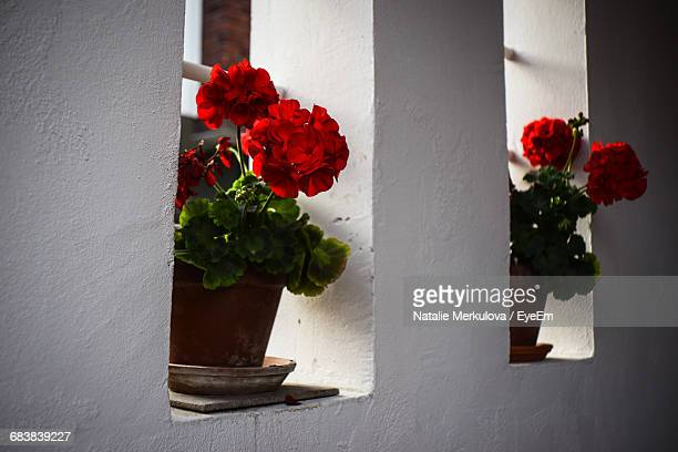 Potted Red Flowers On Window Sills