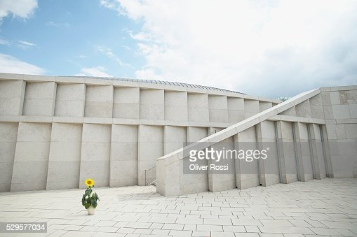 Potted Sunflower in a Courtyard : Stock Photo