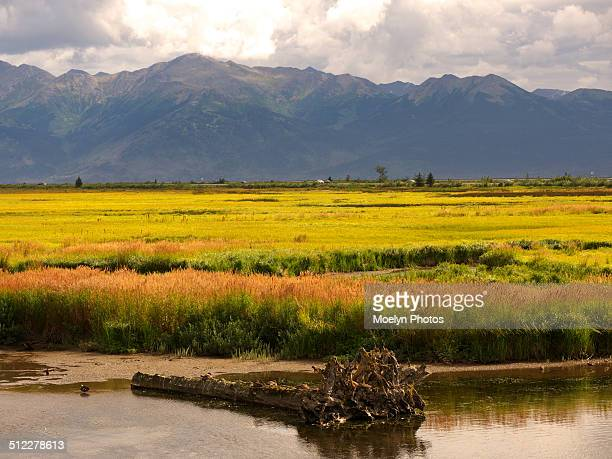 Potter Marsh. Anchorage, Alaska