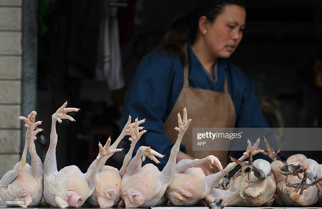 Poultry are displayed at a market stall in Hefei, central China's Anhui province on April 11, 2013. The number of cases of the H7N9 strain of avian influenza rose to 33 on April 10, with nine deaths since China announced over a week ago that it had been found in humans for the first time. CHINA
