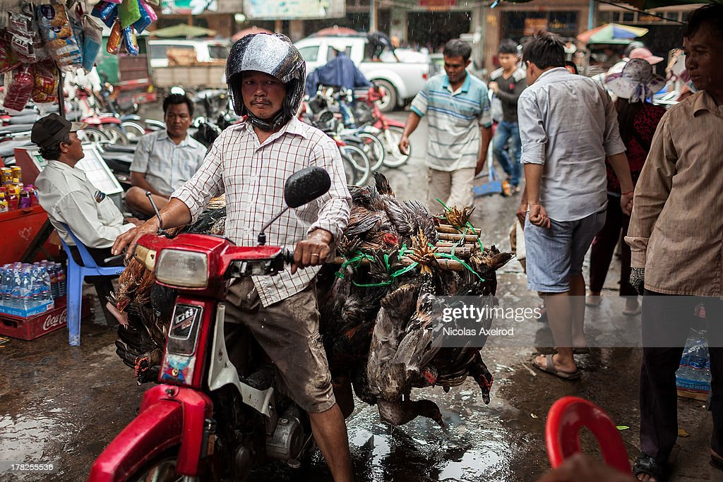 Poultry arrive on a motorcycle at the Orussy markets in central Phnom Penh to be sold on August 28, 2013 in Phnom Penh, Cambodia. Cambodia has seen the worst out break of Avian influenza H5N1 since the disease was first identified, so far this year 17 cases have been report, 10 of which have been fatal.