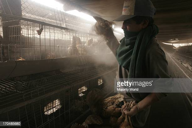 A poultry farm in an area affected by volcanic eruption The Tungurahua an active volcano in the Cordillera Central of Ecuador erupted on July 14th...