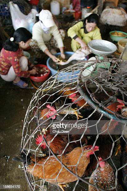 Poultry traders slaughter chickens and ducks at Ha Dong market in Ha Dong town Ha Tay province