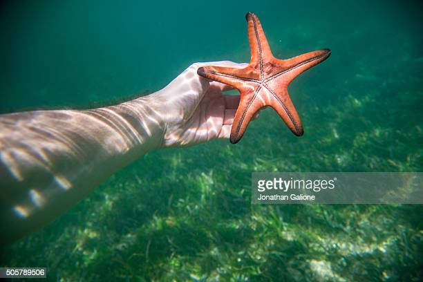 PoV of a hand holding a starfish underwater