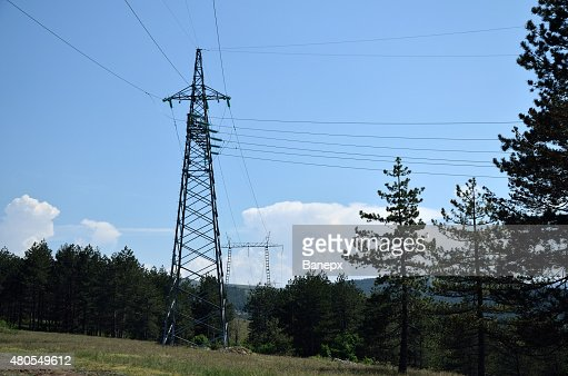 Power lineand pines : Stock Photo