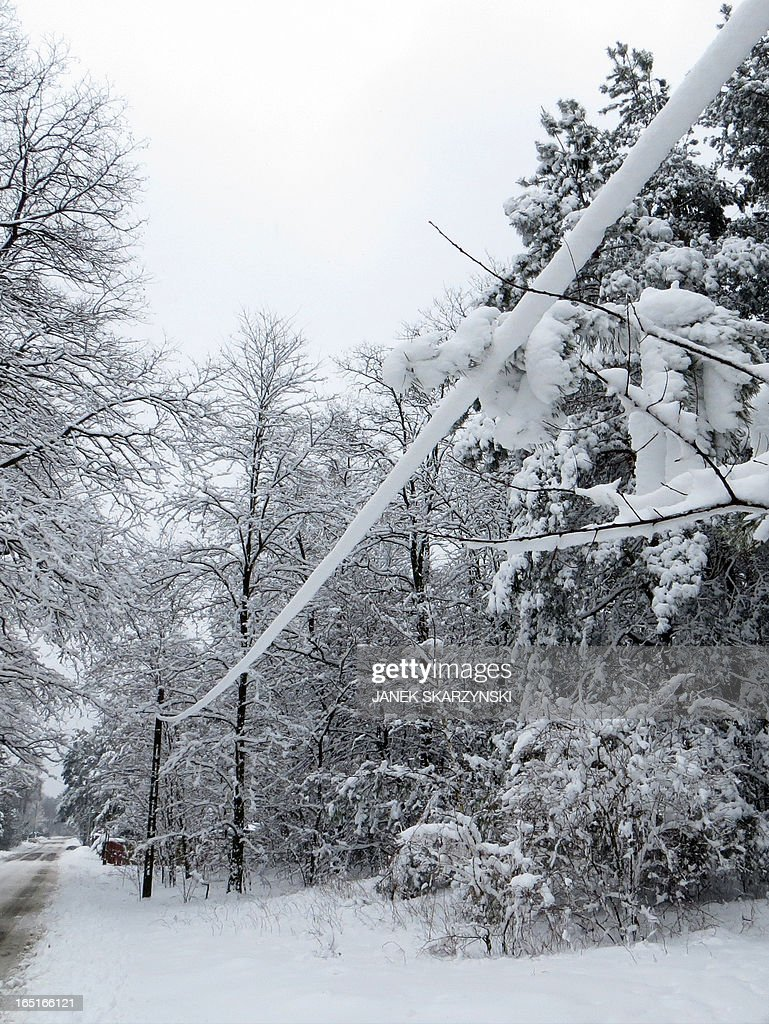 A power supply line is covered in snow on April 1, 2013 in a village near Warsaw. Heavy snowfall in central Poland caused a main power blackout, leaving more than 100,000 domestic homes without electricity.