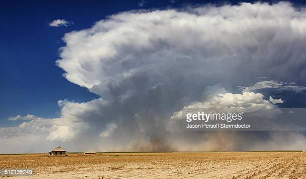 Powerful supercell with strong rear flank downdraft wrapping from left to right in this image kicks up dust and gustnadoes near abandoned farmhouse, Sheridan Lake, Colorado, USA