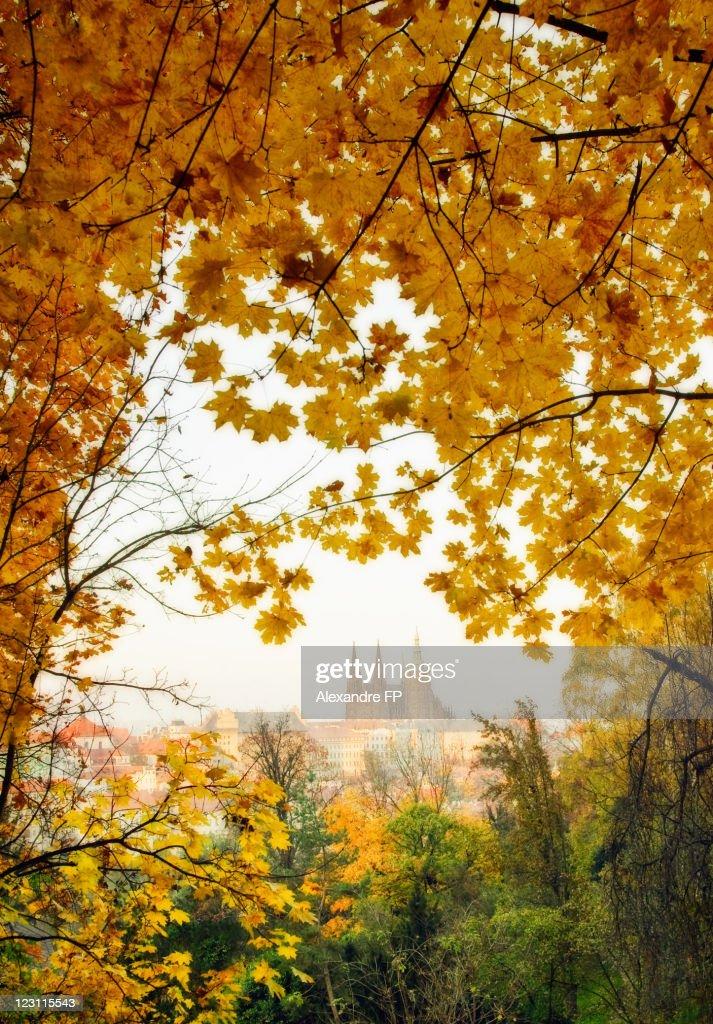 Prague castle seen from Petrin hill in autumn