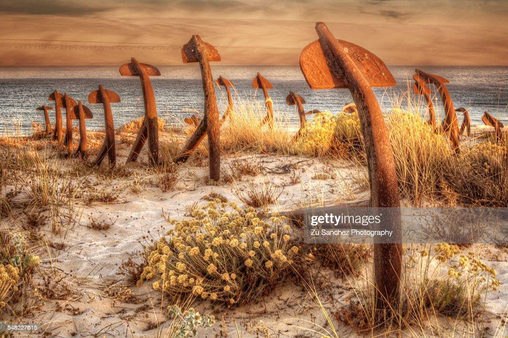 Praia do Barril. Tavira