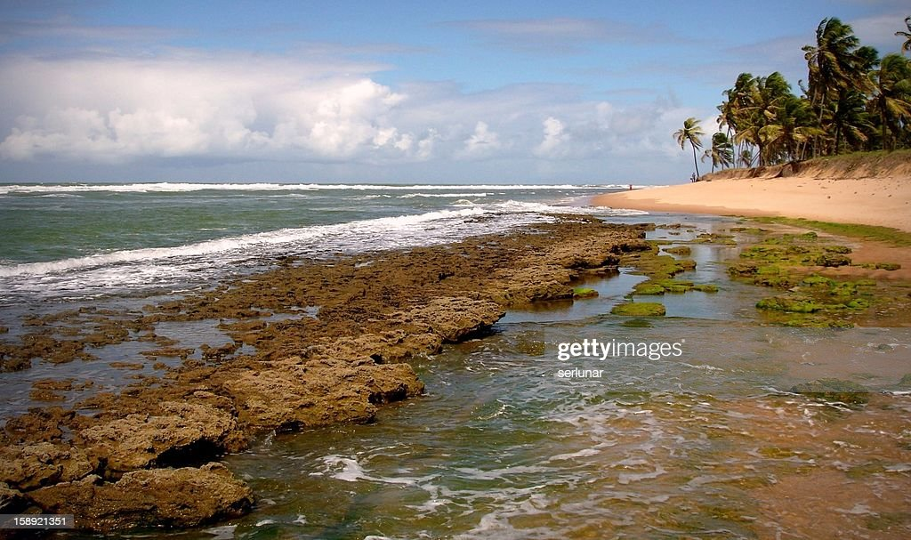 Praia do Forte - Bahia : Stock Photo