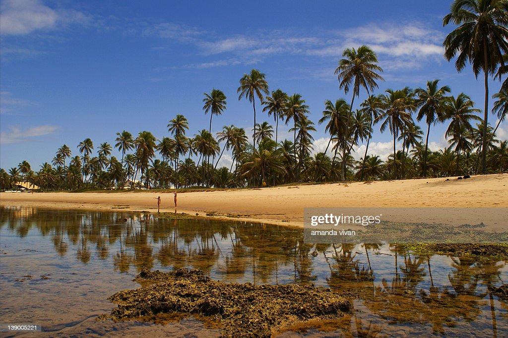 Praia do Forte beach : Stock Photo