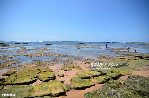 Praia do Forte. Brasil