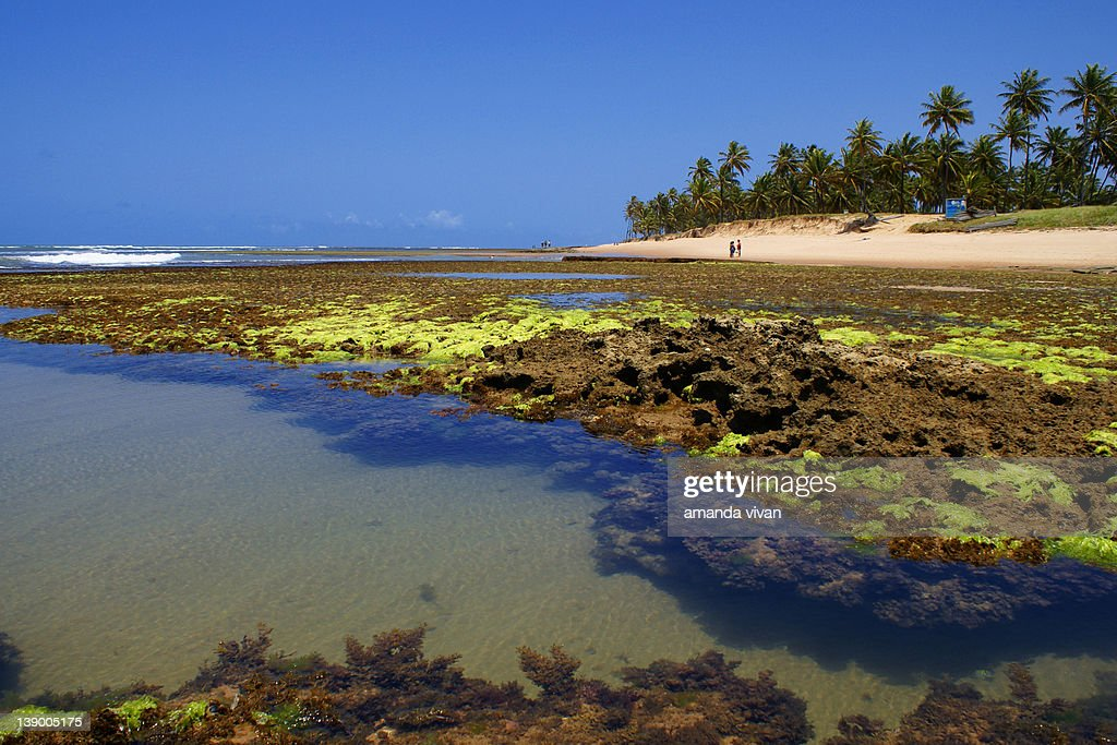 Praia do Forte : Stock Photo