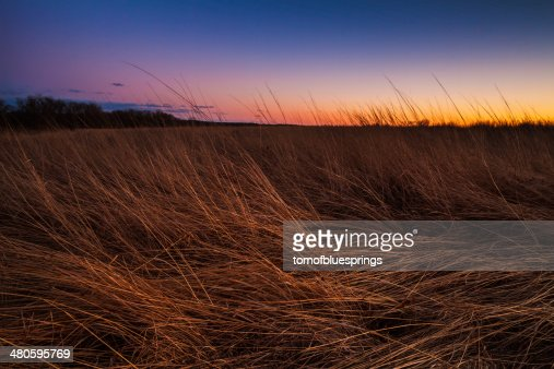 Prairie at Dusk : Stock Photo
