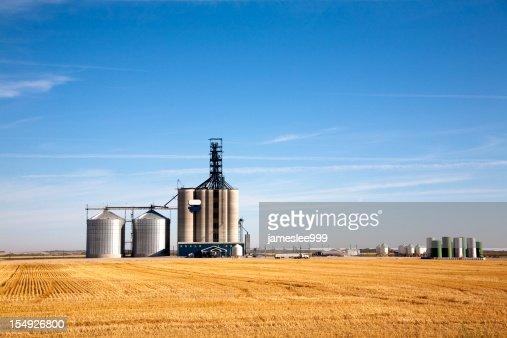 Prairie elevator and grain bin in a field of wheat