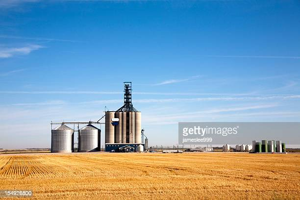 Prairie elevator and grain bin in a field of wheat