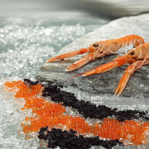 Prawns and red and black caviar on ice