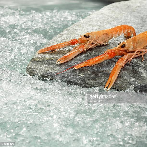 Prawns on crushed ice, close-up
