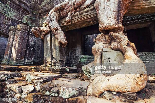 Preah Khan temple covered by strangler fig tree