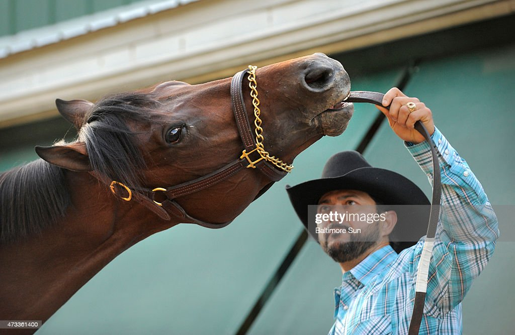 Preakness entrant Firing Line is held by assistant trainer Carlos Santamaria amid morning workouts at Pimlico Race Course in Baltimore on Thursday...