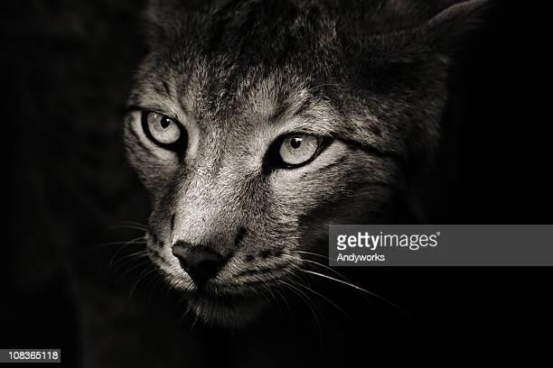Predator In The Darkness