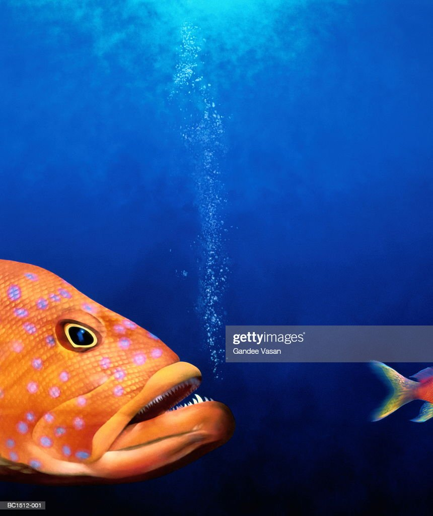 Predatory fish chasing smaller fish (Digital) : Stock Photo