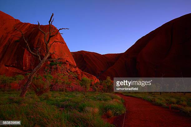 Pre-Dawn Light At Uluru