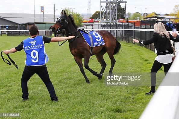 Preemptive breaks free before the start of Latrobe City Maiden Plate at Moe Racecourse on October 13 2016 in Moe Australia
